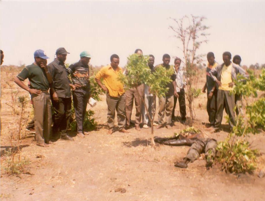 Bush Sr. Made a Killing – 50 Miners Buried Alive